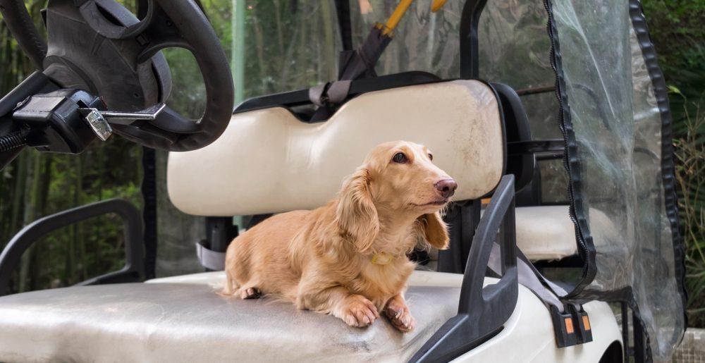 Tag på golftur med din hund